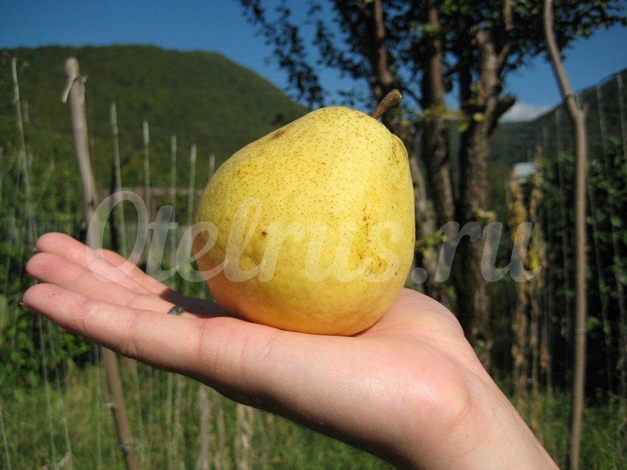 Фрукты, овощи и др - Отдых в Испании (Аликанте) Жилье