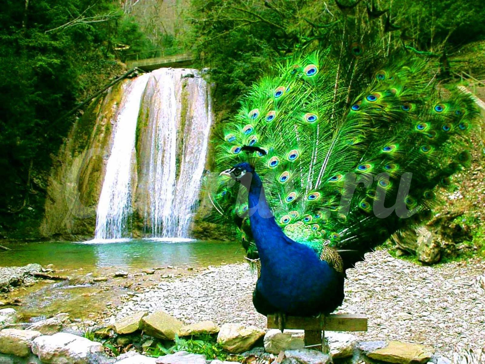фото 33 водопада сочи